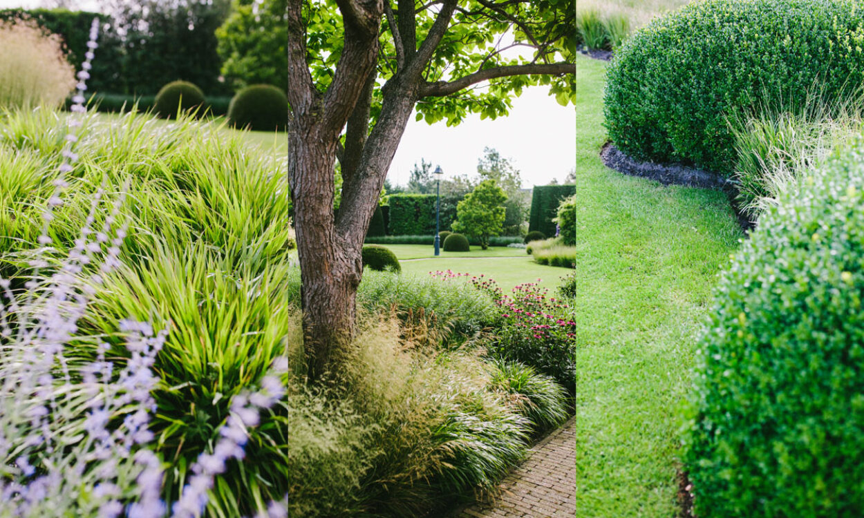 Kleurrijke borders en grassen 12