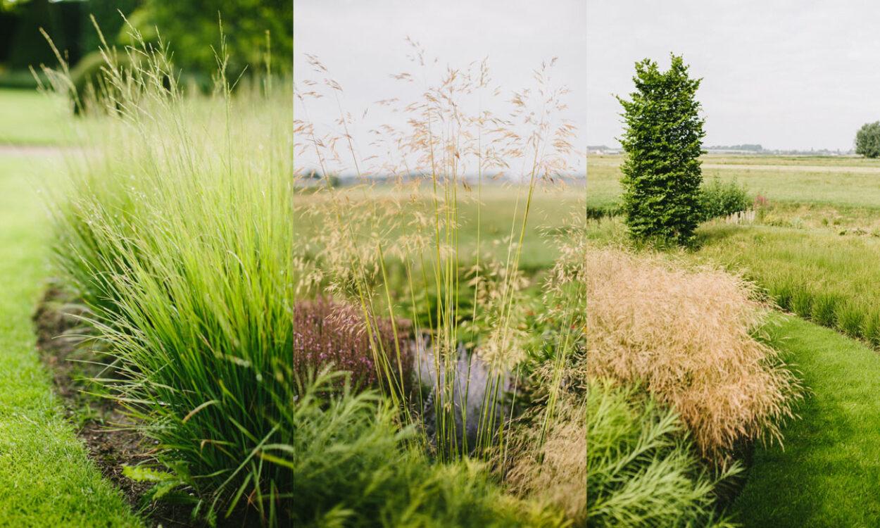 Kleurrijke borders en grassen 15