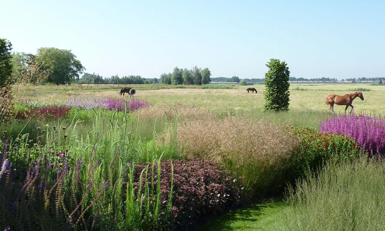 Kleurrijke borders en grassen 6